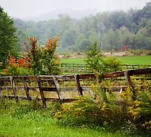FOGGY DAY OVER THE KNOBS IN INDIANA by Pauline Evans