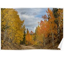 Burning Orange and Gold Autumn Aspens Back Country Colorado Road Poster