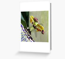 Hoverfly on a Passionflower Greeting Card