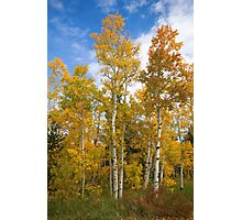 Colorado Autmn Aspens Photographic Print