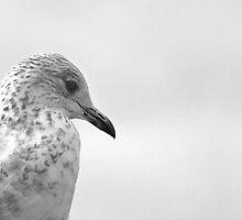 Pigeon Pride by gmnick