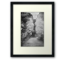 Colorado Autumn Aspen Road BW Framed Print