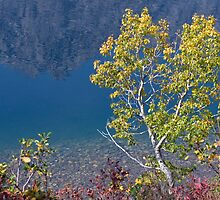 Fall at Jenny Lake by Eivor Kuchta