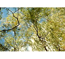 Windy Trees Photographic Print