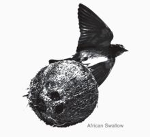 African Swallow by ACImaging