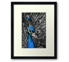 Peacock with selective colouring Framed Print