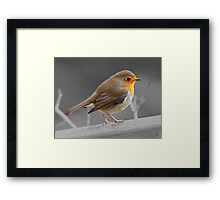 European Robin Red Breast with selective colour Framed Print