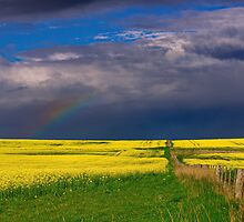 """""""After The Storm"""" by Phil Thomson IPA"""