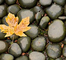 Leaf Me Alone by Don Schwartz