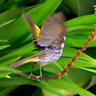Bird In Motion by photoj