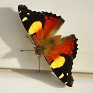 Ruby Red Butterfly by photoj