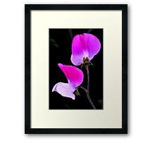 'Sweet Pee' Flowers Framed Print