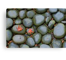 Two Red Leaves Cling to the Rocks Canvas Print