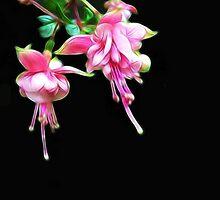 Kathie McCurdy Pink Fuschia Black Night Sky by Kathie McCurdy