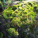 Mossy Rock by Amiteestoo