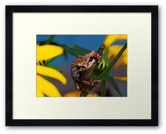 My Garden Frog by Tori Snow