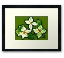 Kathie McCurdy White Dogwood Abstract Framed Print