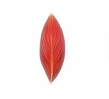 Kathie McCurdy Pressed Red Canna Leaves by Kathie McCurdy
