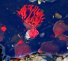 Sea Flowers by George Petrovsky