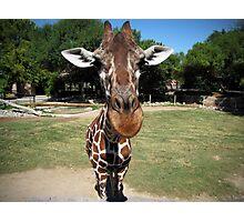 Texas the Giraffe Up Close Photographic Print