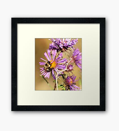 Bumble Bee Bumble Bee Framed Print