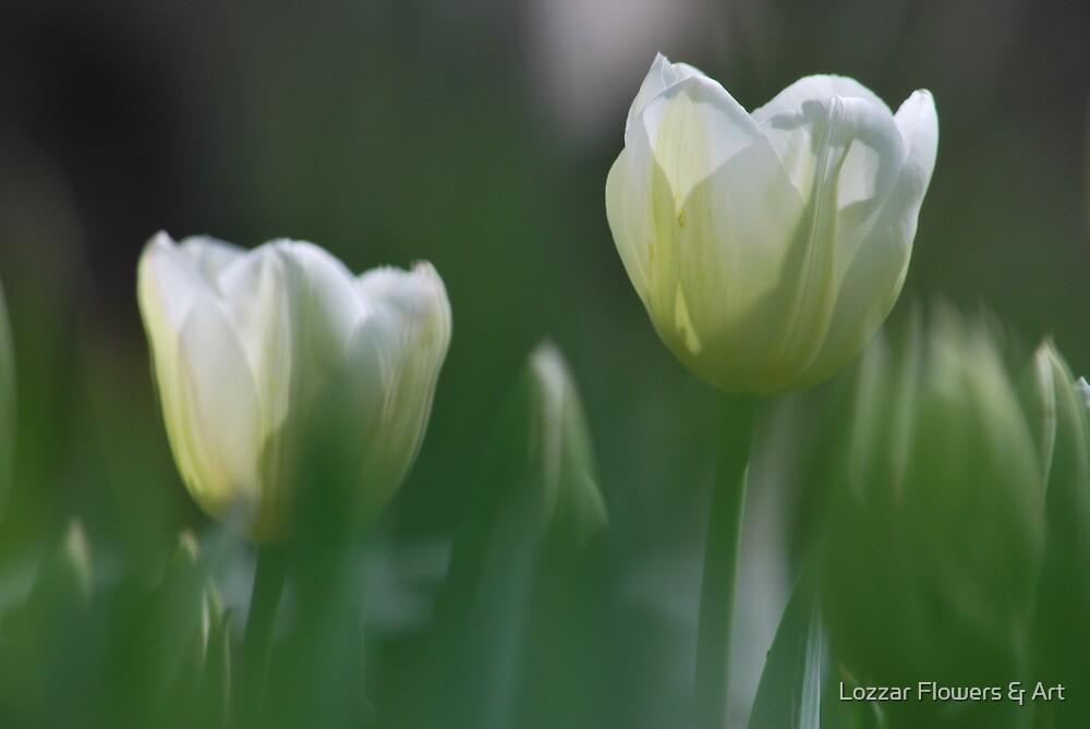 Spring Softness by Lozzar Flowers & Art