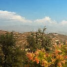 Griffith Park by zzsuzsa