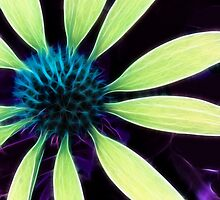 Kathie McCurdy Botanical Art Coneflower Abstract Flowers by Kathie McCurdy
