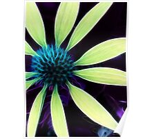 Kathie McCurdy Botanical Art Coneflower Abstract Flowers Poster