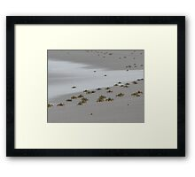 ghost crabs Framed Print