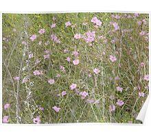 Spreading Purple Gerardia, Endangered Species Poster