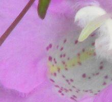 Purple Gerardia Beauty by Navigator