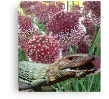 caiman lizard with flowers Canvas Print