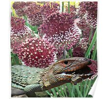 caiman lizard with flowers Poster