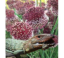 caiman lizard with flowers Photographic Print