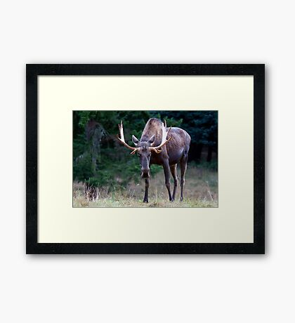 Don't Goose the Moose Framed Print