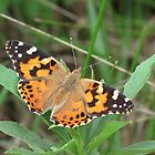 Autumn's Painted Lady by Ron Russell