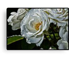 Gardenia - Gardenia Jasminoides Canvas Print