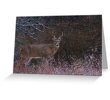Snowy Buck - White-tailed deer Greeting Card