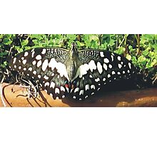 Lovely Butterfly Photographic Print