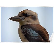 Close Up Kookaburra Poster
