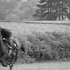 Mark Johnston's Gallops - Middleham #1 by acespace