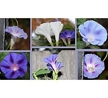 Morning Glories Photographic Print