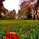 Red Leaf Under The Hot Autumn Sun  by Kuzeytac