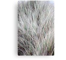 Dune Grass like Fur Canvas Print
