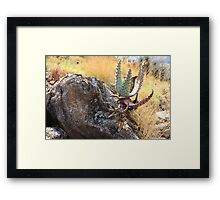 With anchor, it grows Framed Print