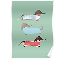 Sausage Dogs in Jumpers Poster