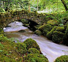 Kilfane Glen & Waterfall by Martina Fagan