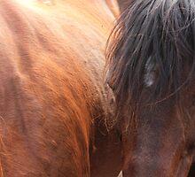 Horse Hair by Jim Sauchyn