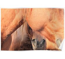 Horse Hides  Poster